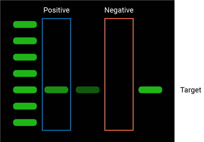 Blot with positive and negative control lanes