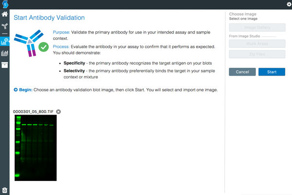 Empiria Studio Software antibody validation screen