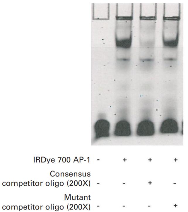 IRDye 700 AP-1 EMSA data