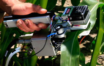 measuring corn with the 6400-02B LED Light Source