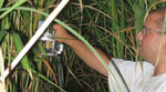 Cellulosic Ethanol Study of Miscanthus Using the LI-6400