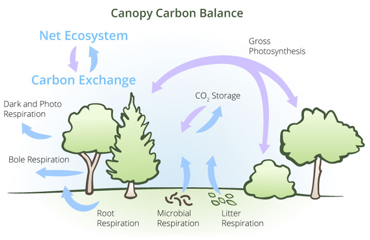 open and closed systems - Open Canopy 2015
