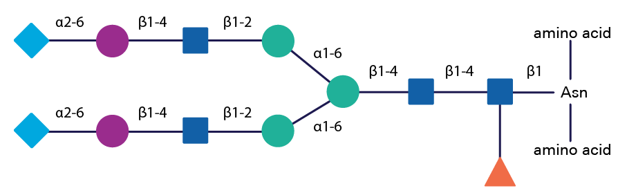 N linked structure