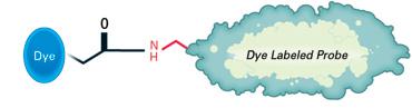 IRDye® 680RD NHS Ester amide bond