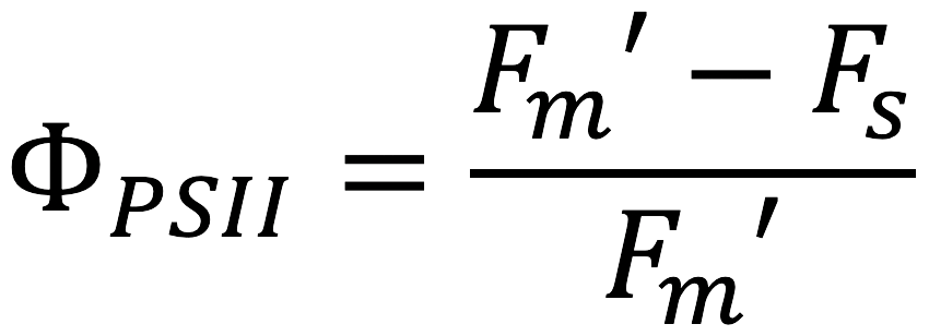 equation for light adapted leaves with the LI-600 Porometer Fluorometer